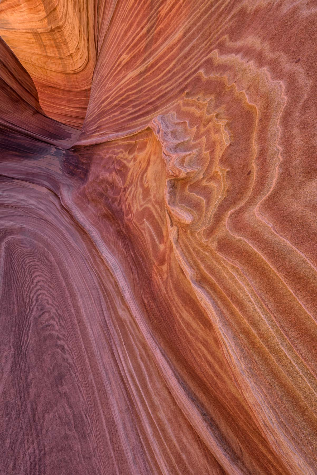 Soft sediment deformation at The Wave in Coyote Buttes North